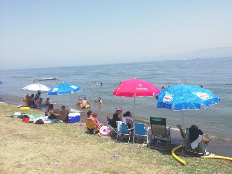 חוף שקמים בכנרת (צילום: יפעת קרוננפלד איגוד ערים כינרת)