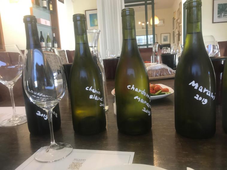 טעימת יינות רקנאטי  (צילום: יאיר גת )