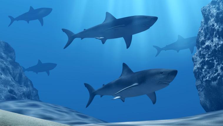 כרישים (צילום: אינג אימג')