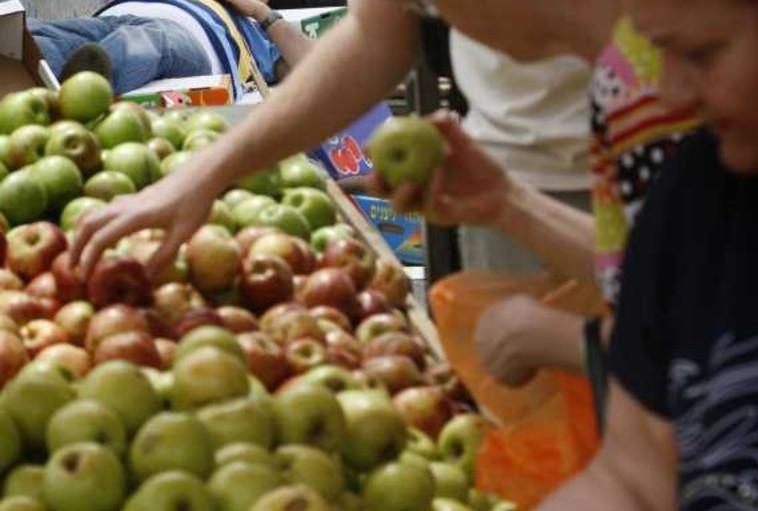 תפוחים (צילום: מיכל פתאל, פלאש 90)