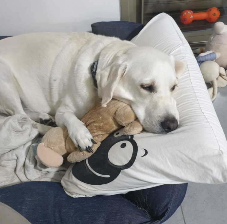 כלבה, אילוסטרציה (למצולמת אין רשא לנאמר בכתבה) (צילום: ללא)