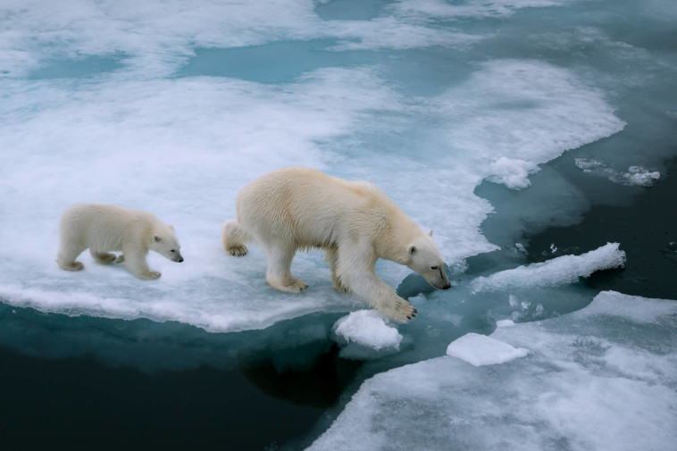 ההתחממות הגלובלית: המסת הקרחונים בקטבים; סופות שלגים וטמפרטורות קפואות באזורים אחרים (צילום: שאטרסטוק)