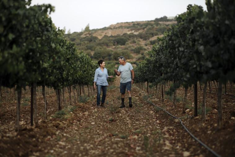 לורי ושייקה לנדר בכרם, יקב צפרירים  (צילום: יח''צ)