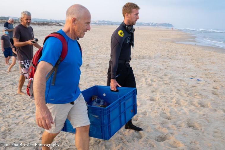 שחרור צב הים כפיר (צילום: לוצ׳י ברסלר, רשות הטבע והגנים)