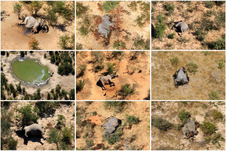 כ-350 פילים קיפחו את חייהם (צילום: רויטרס)