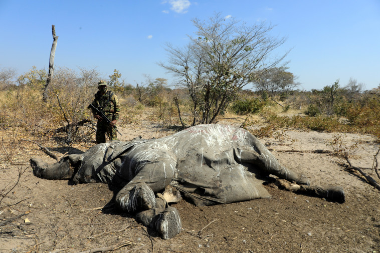 One of the elephants killed in Botswana (Photo: Reuters)