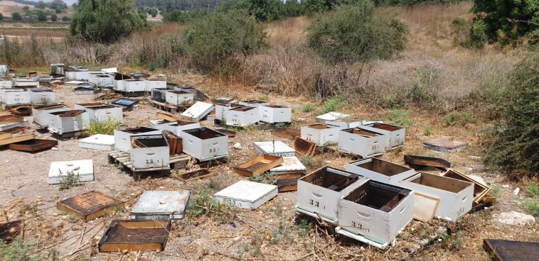 גניבת חלות דבש (צילום: מועצת הדבש)