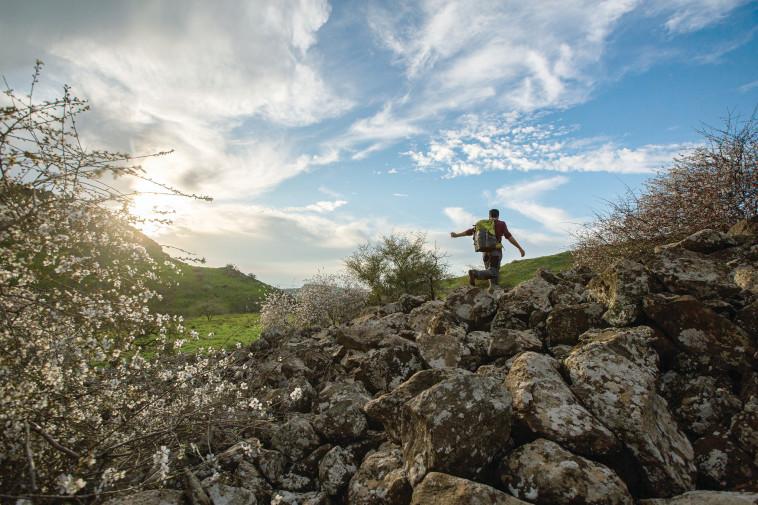 רמת הגולן (צילום: מאור קינסבורסקי, פלאש 90)