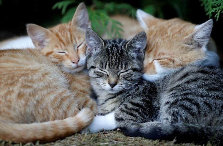 חתולים ישנים (צילום: רויטרס)