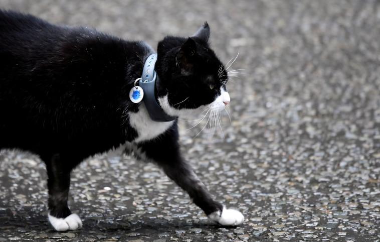 פאלמרסטון, החתול הרשמי של משרד החוץ הבריטי, בימיו האחרונים בתפקיד (צילום: רויטרס)