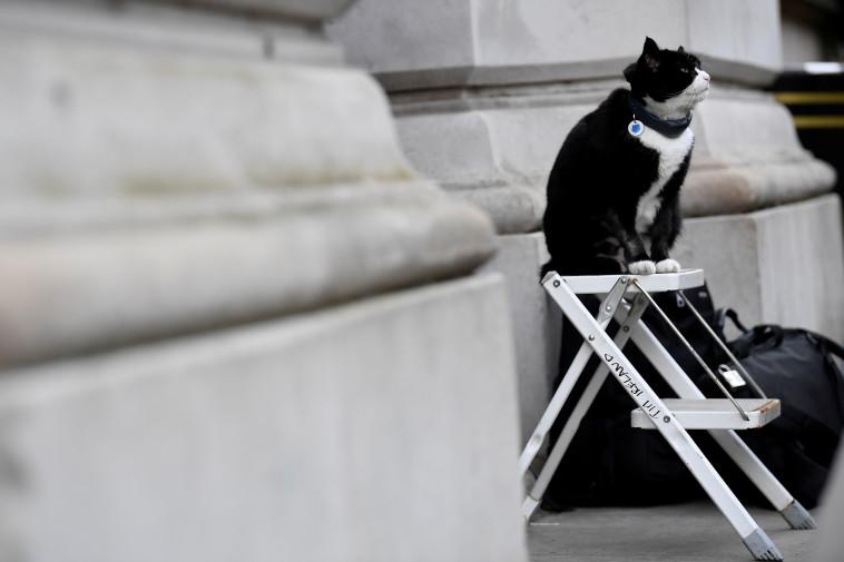פאלמרסטון, החתול הרשמי של משרד החוץ הבריטי, נח במסגרת עבודתו (צילום: רויטרס)