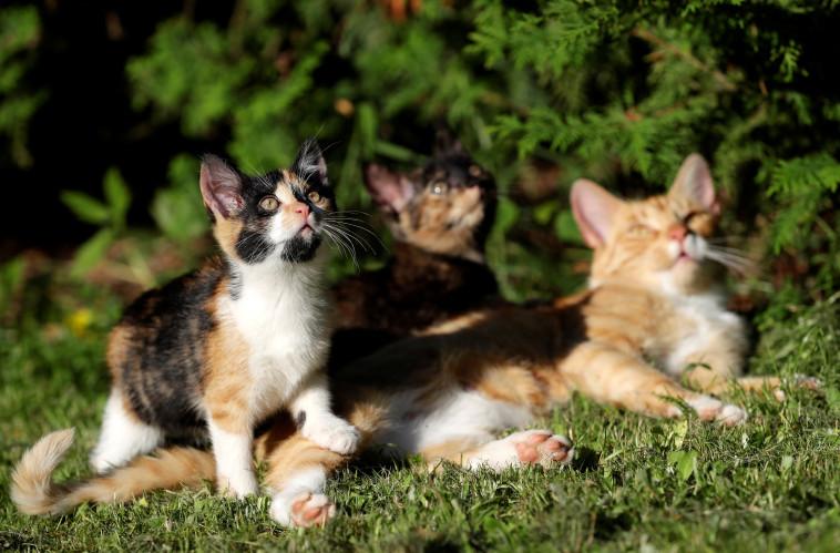 חתולים חמודים בדשא (צילום: רויטרס)