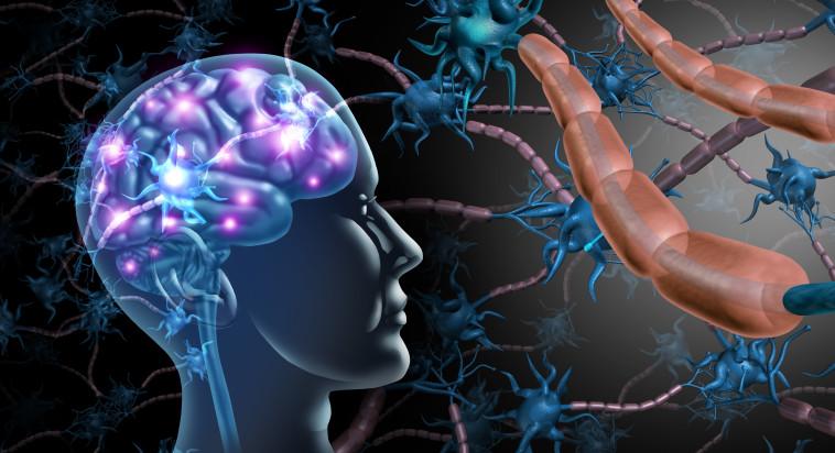 המוח האנושי (אילוסטרציה) (צילום: אינג אימג')