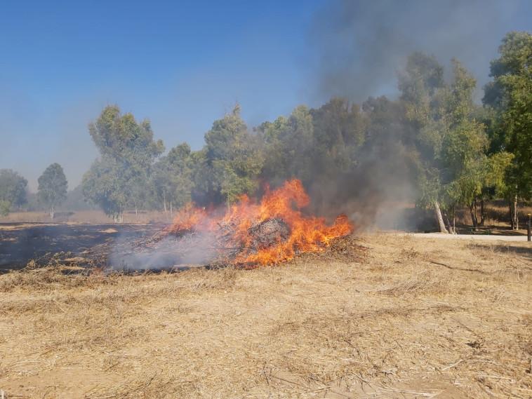 שריפה ביער שוקדה (צילום: איציק לוגסי, יערן קק״ל)
