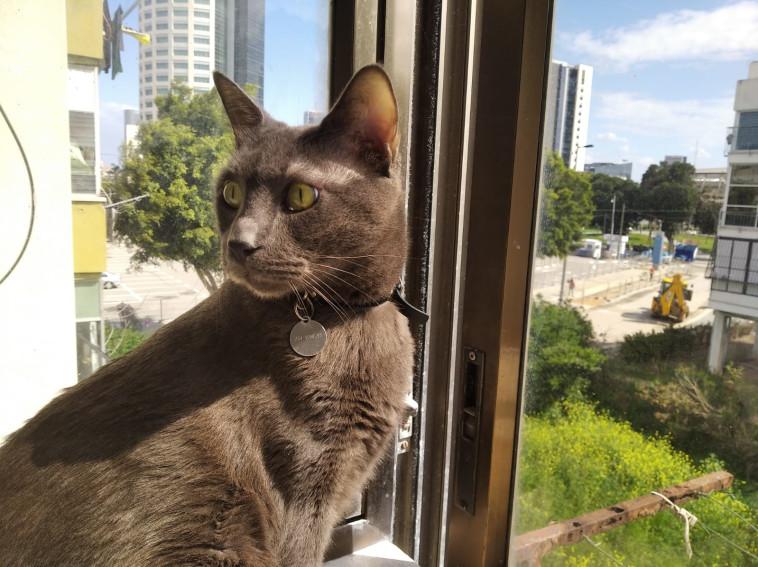חתול תל אביבי (צילום: רשתות חברתיות)