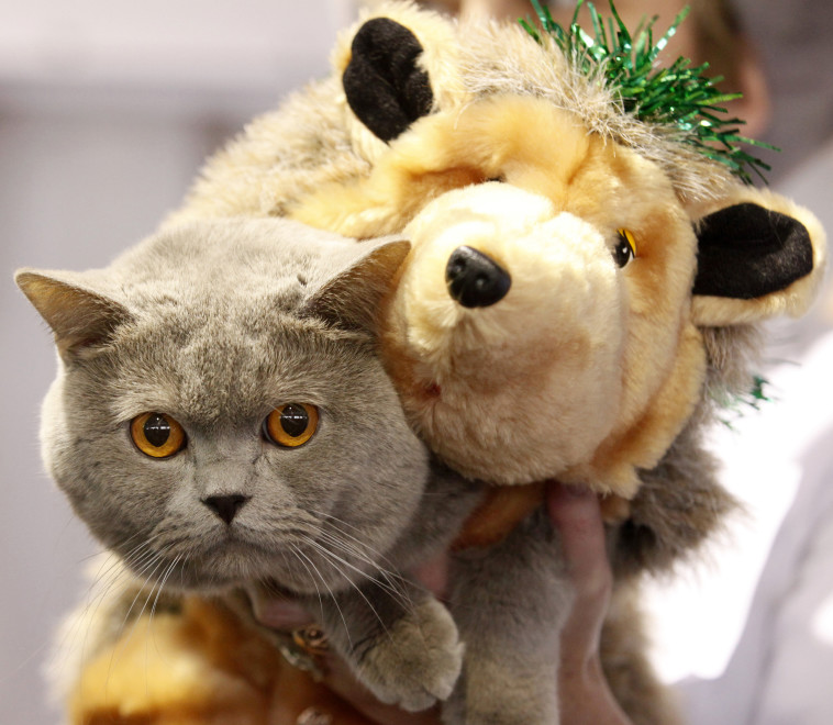 חתול  (צילום: רויטרס)