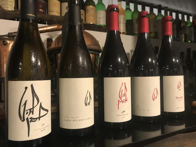 טעימת יינות להט - מרכז איש הענבים  (צילום: סנהדרינק)