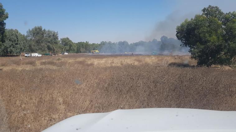שריפה ביער בארי (צילום: משה ברוכי, קק''ל)