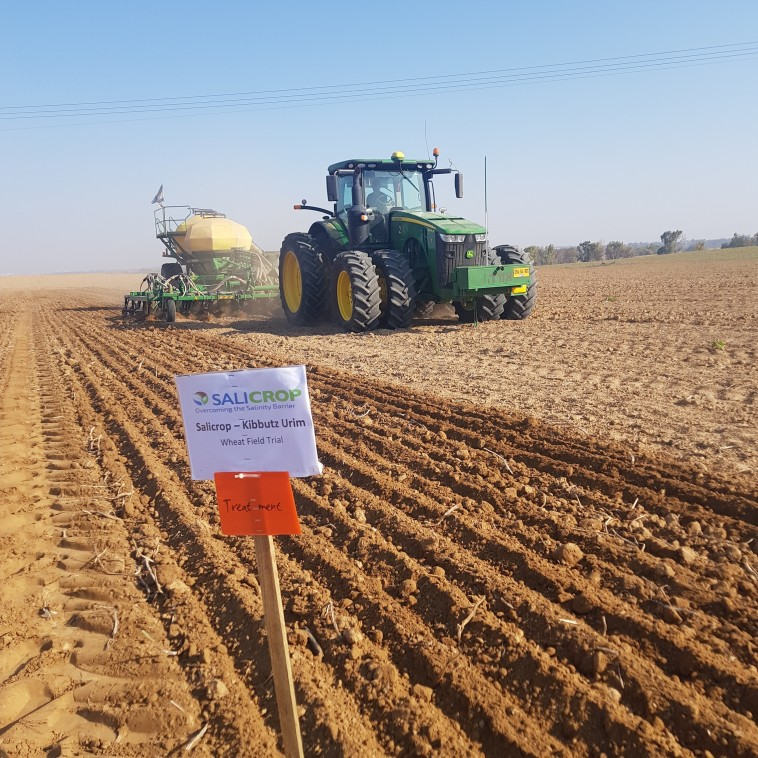 שדה בו נזרעו זרעי סאליקרופ (צילום: סאליקרופ)