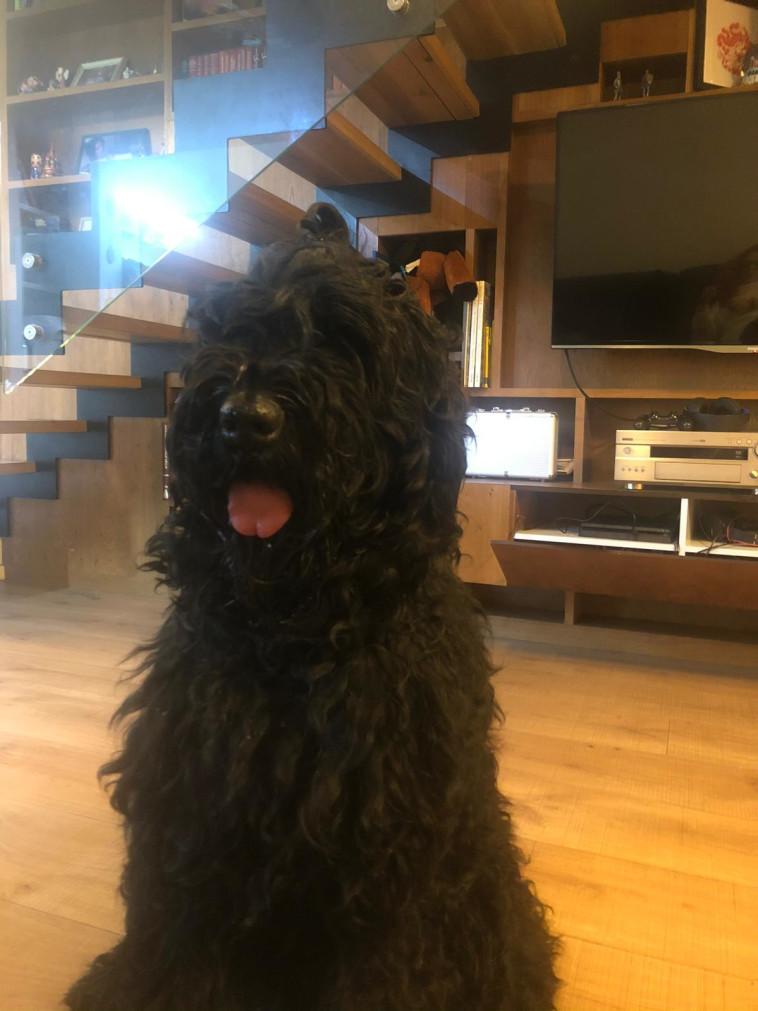 הכלב ג'וני (צילום: פי קיור)