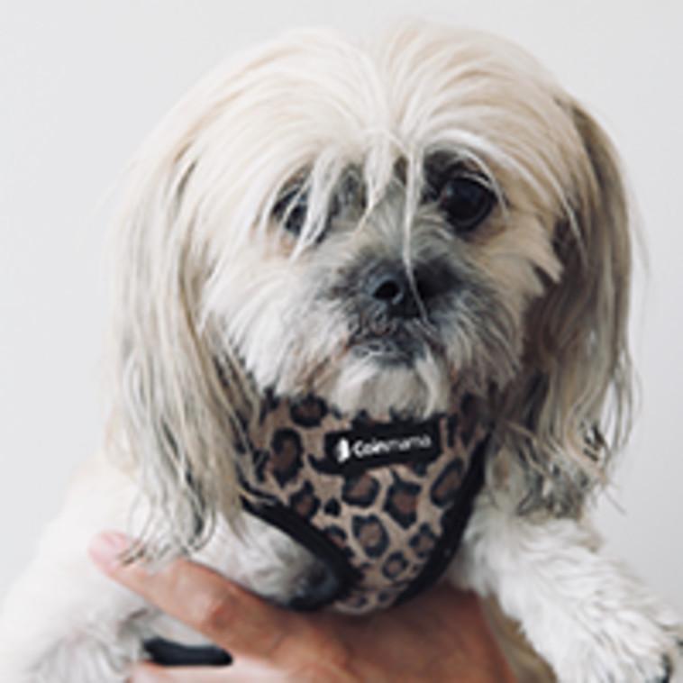 הכלבה ליצ'י (צילום:  קוינמאמא)
