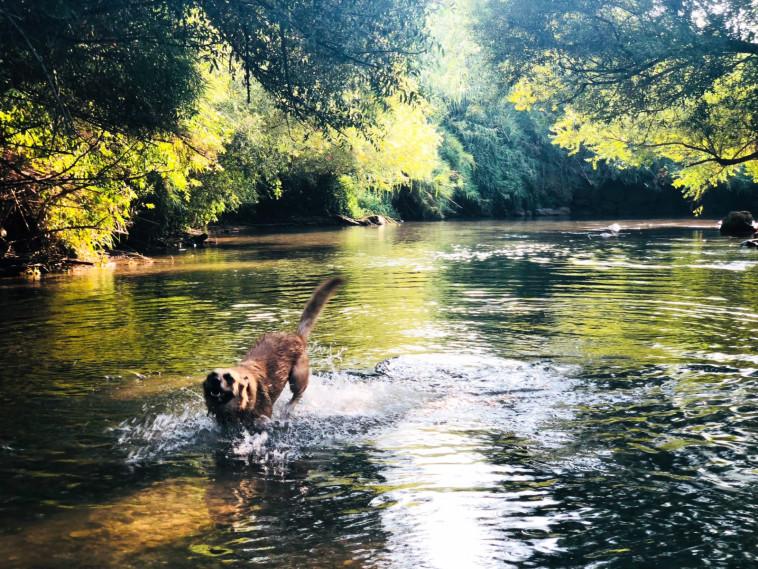 כלב משתכשך במים (צילום: פלג יעקב)