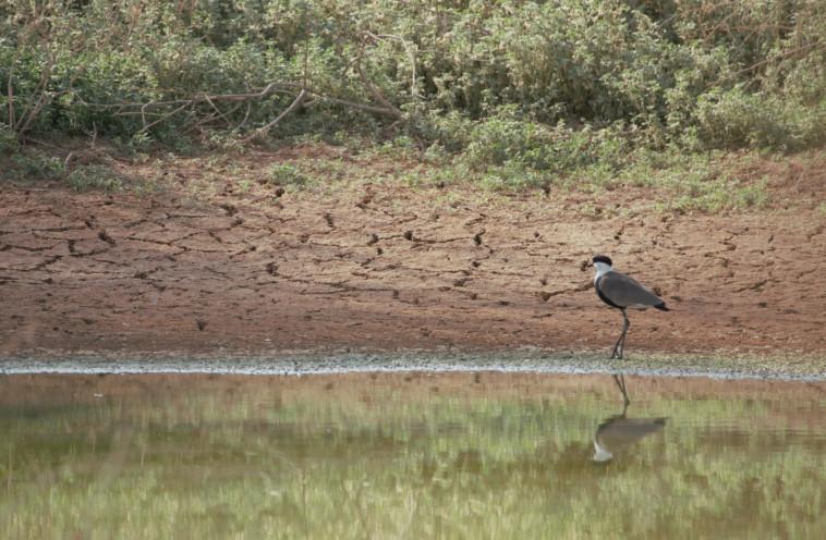 עופות בשמורת שיזף, ומאגר נקרות ליד עין יהב (צילום: דליה מטמון)