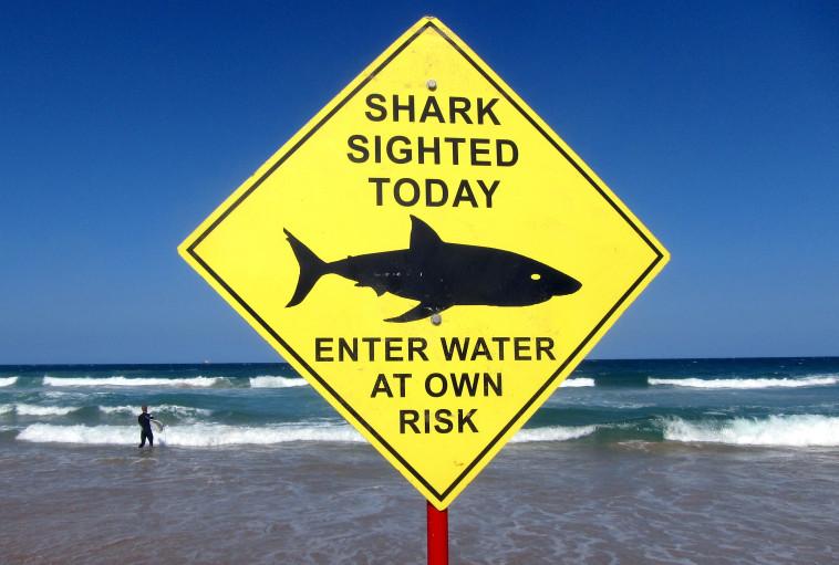 שלט אזהרה מפני כרישים באוסטרליה (צילום: רויטרס)