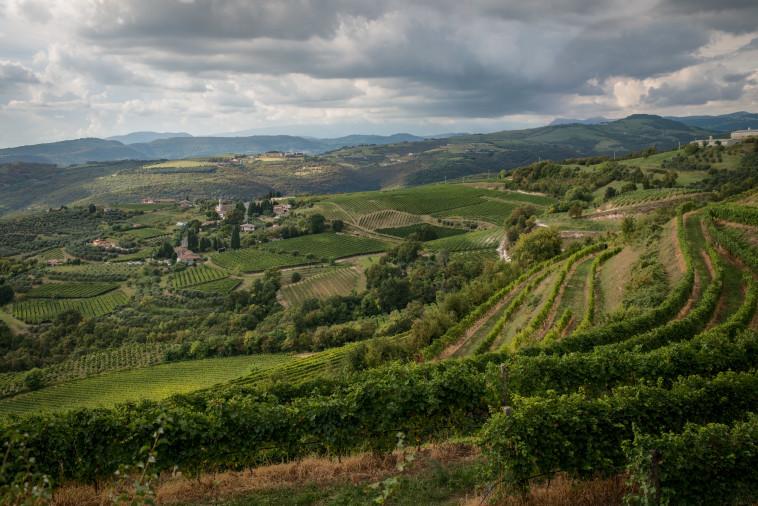 יקב טנוטה קאבוטה, איטליה - כרמים  (צילום: יח''צ חו''ל)