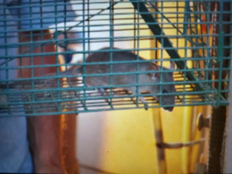 עכבר קטן בביתו של בון (צילום: רשתות חברתיות)