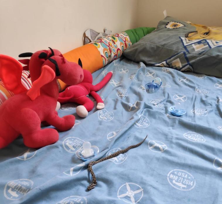 נחש שהתגלה על מיטת ילדים בקיבוץ (צילום: באדיבות קיבוץ שמרת)
