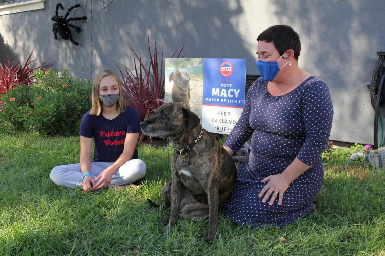 הכלבה מייסי רצה לראשות הוועד  (צילום: רויטרס)