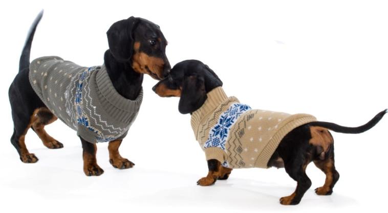 סוודר לכלב - RIBOS ביופט (צילום: יגאל פרדו)
