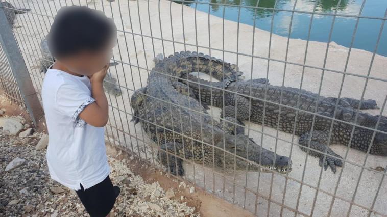 הילד שננשך על ידי תנין (צילום: באדיבות המשפחה)