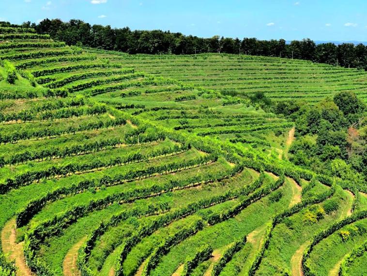 גבעות חלוז', סלובניה  (צילום: סארו, יינות איכות מהבלקן )