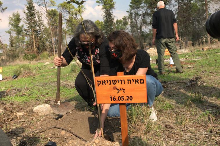 עץ לזכרה של מאיה ווישניאק ז''ל (צילום: מערך ההסברה קק''ל)