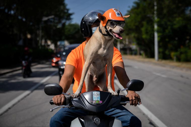 בוגי הכלב ובעליו גילברט דלוס רייס (צילום: רויטרס)