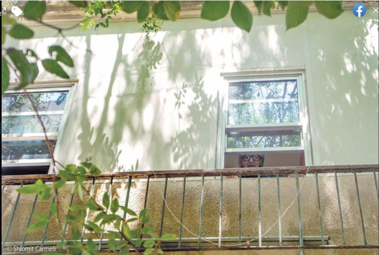 זהבי בחלון (צילום: שלומית כרמלי)