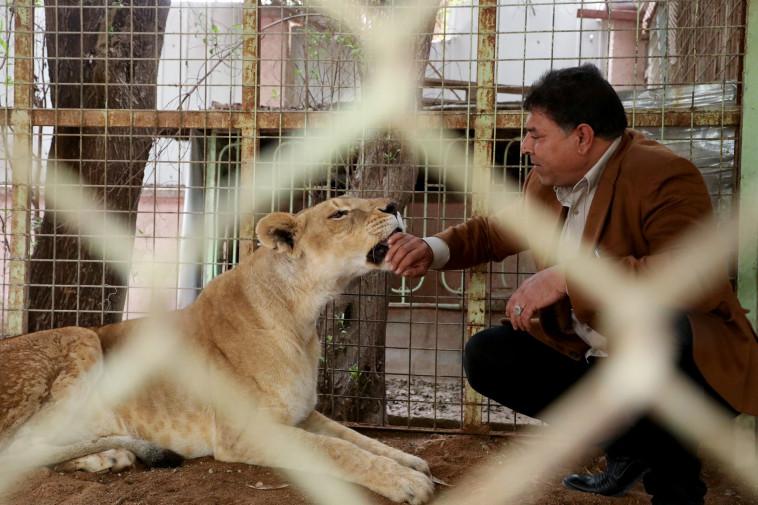 אל-מאראג'לה ואריה המחמד שלו (צילום: רויטרס)