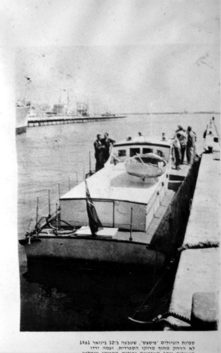 אניית אגוז (צילום: רוני שיצר)