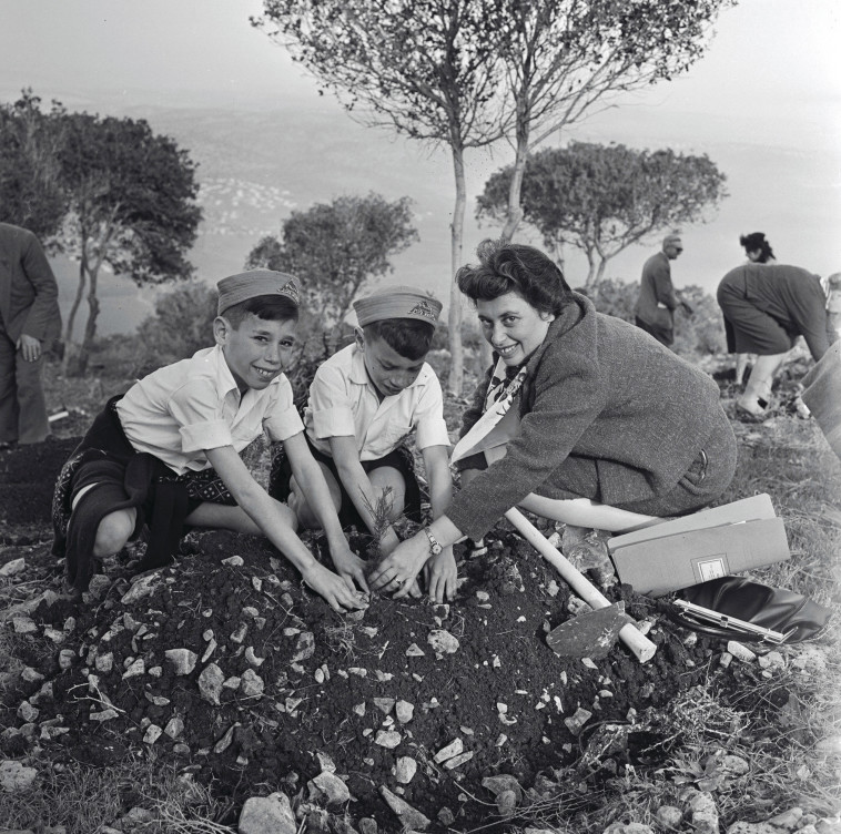 טקס נטיעת העץ ה-50 מיליון, 1961 (צילום: משה שויקי)