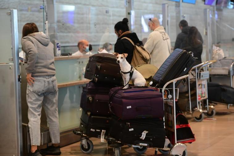 נתב''ג. הממשלה צפויה לאשר איסור טיסות למשך שבועיים (צילום: אבשלום ששוני)