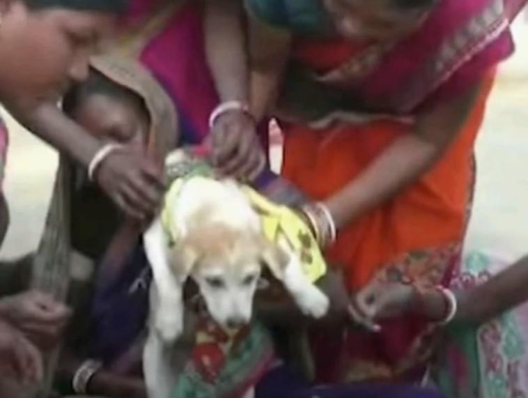 הכלב בטקס החתונה (צילום: צילום מסך יוטיוב)