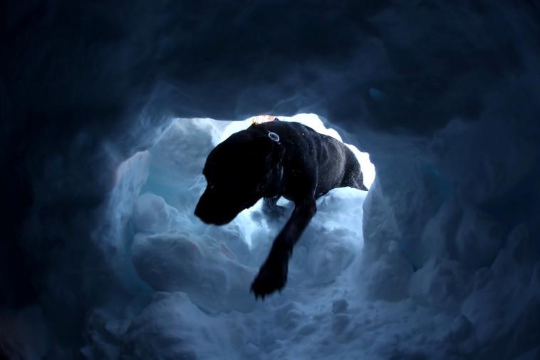 כלבים מחלצים לכודים מתוך השלג (צילום: רויטרס)