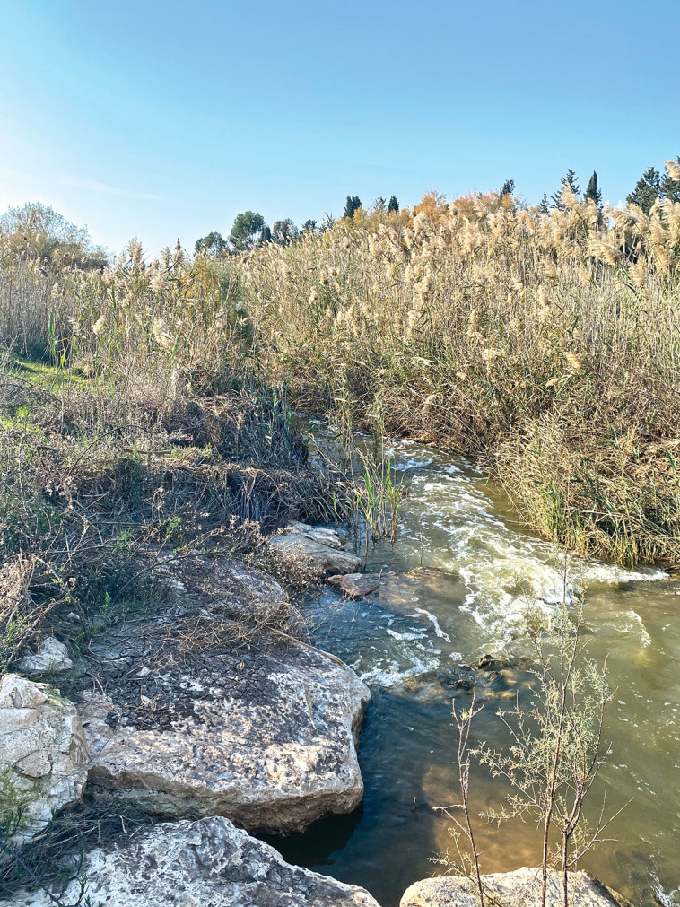 Flow in the Jezreel Valley (Photo: Meital Sharabi)