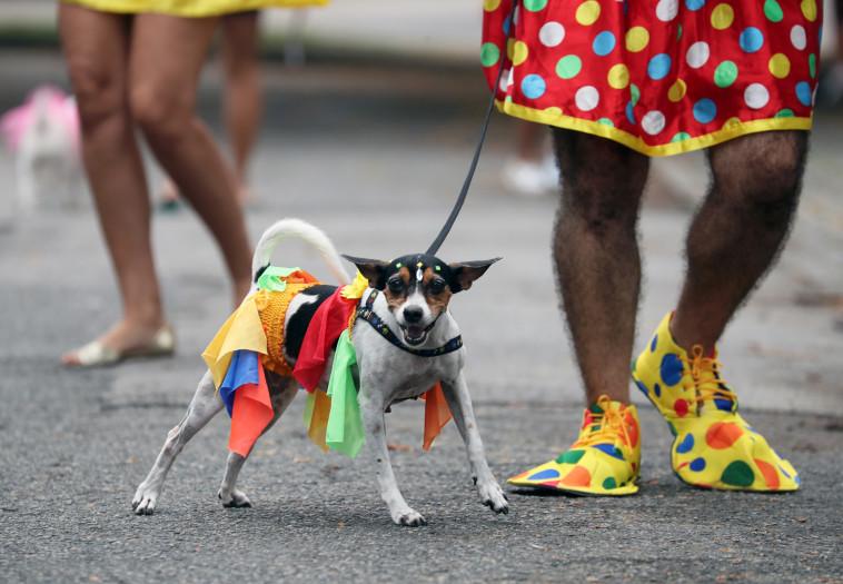 כלבים מחופשים בקרנבל בריו (צילום: רויטרס)