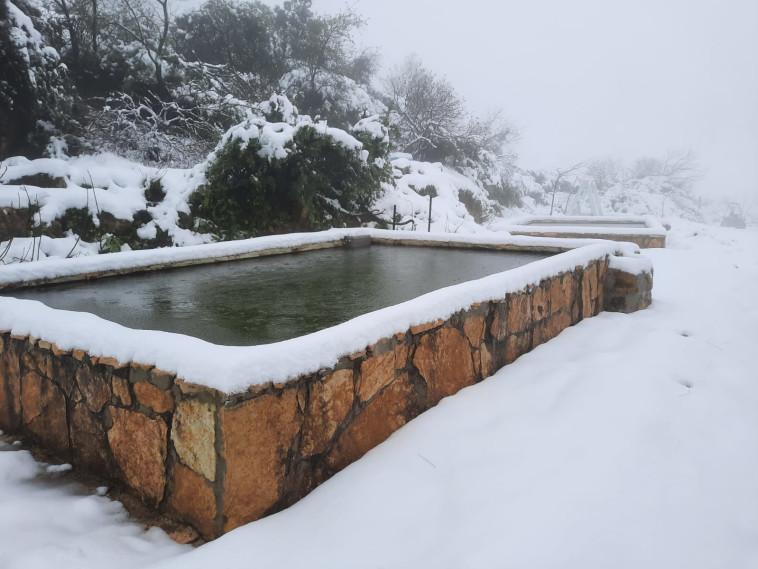 שלג בגוש עציון (צילום: ליאור שכטר)