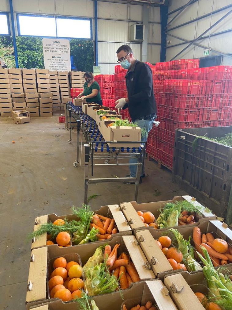 איסוף מזון של 'לקט ישראל' (צילום: באדיבות לקט ישראל)