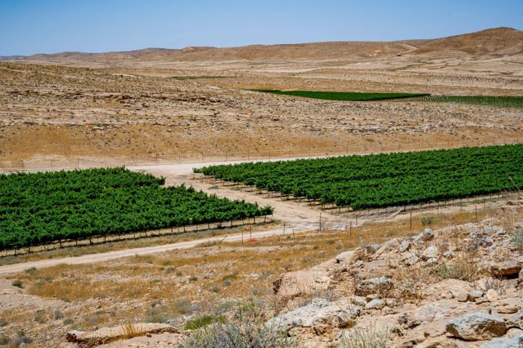 יקב ננה. כרמים במדבר  (צילום: באדיבות היקב )