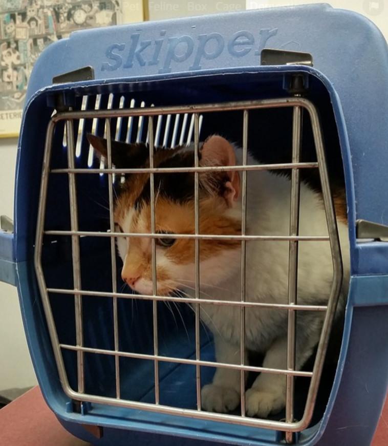 החתול שאחראי לנחיתת החירום (צילום: רשתות חברתיות)